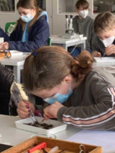 Forscherklasse 5c: Untersuchungen an Schleiereulen-Gewöllen